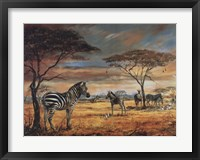 Framed Zebras on the Plains