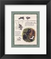 Framed Bear Study