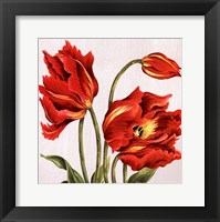 Framed Tulips on Silk