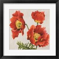 Framed Poppies on Silk