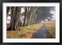 Framed Eucalyptus Fog