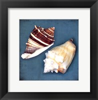Two Shells III Framed Print