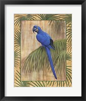 Framed Hyacinth Macaw
