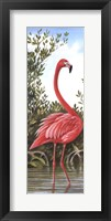 Framed Flamingo 2