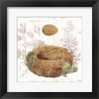Framed Botanical Nest IV