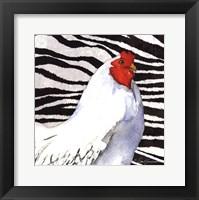 Framed Zebra Rooster