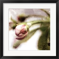 Framed Apple Blossom III