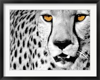 Framed White Cheetah