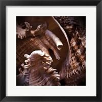 Macro Shells IV Framed Print