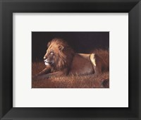 Framed Majestic Lion