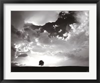Framed Lone Tree
