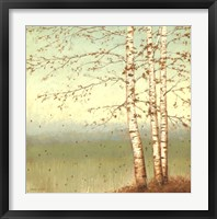 Framed Golden Birch II with Blue Sky