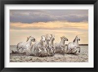 Framed Camargue Horses - France