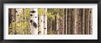 Framed White Forest Standing