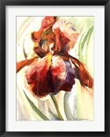 Framed Colors of Iris II