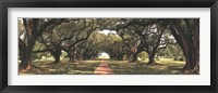 Framed Enchanted Oaks
