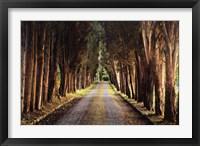 Framed Tree Tunnel