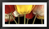 Framed Sunshine Tulips