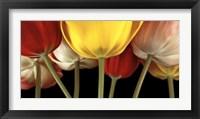 Framed Sunshine Tulips