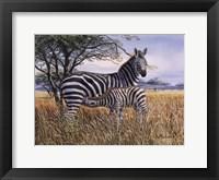 Framed Zebra and Foal