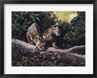 Framed Bobcat Kittens