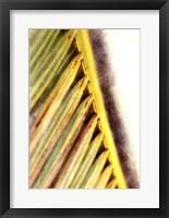 Framed Frond Study I