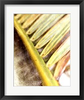 Framed Frond Study II