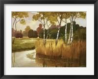 Framed Reeds, Birches & Water II