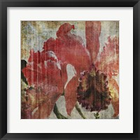 Pacific Orchid I Framed Print