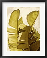 Palm Fronds III Framed Print