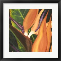 Framed Bird Of Paradise Tile I