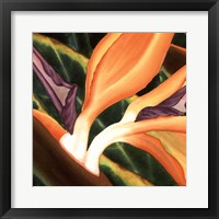 Framed Bird Of Paradise Tile III