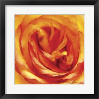 Framed Painterly Flower I