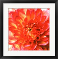 Framed Painterly Flower II
