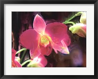 Framed Painterly Flower V