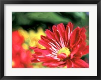 Framed Painterly Flower VI