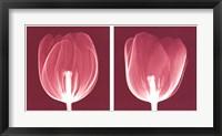 Framed Tulips [Negative]