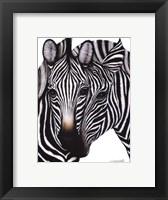 Framed Zebras
