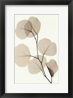 Framed EUCALYPTUS LEAVES