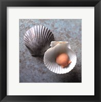 Framed Scallops