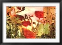 Framed Midday Bloom I