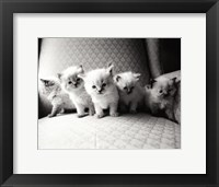 Framed Five Kittens