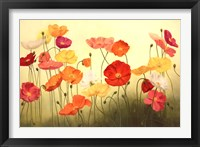 Framed Sunlit Poppies