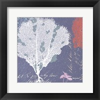 Framed Coral on Blue