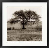 Framed Willow Tree