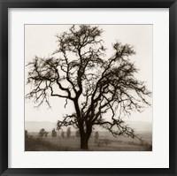 Framed Country Oak Tree
