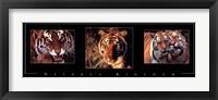 Framed Nature's Kingdom-Tigers