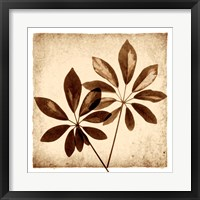Framed Cassava Leaves