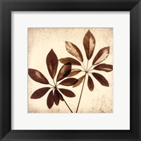 Framed Cassava Leaves