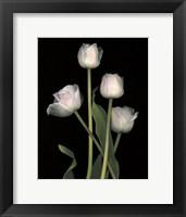 Spring Song I Framed Print